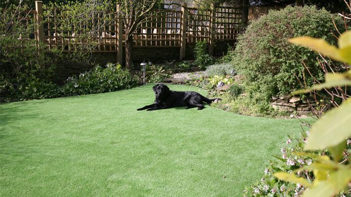 gardendogblack
